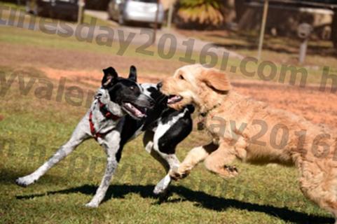 10 Hundeparkregeln, die jeder Welpenelternteil kennen sollte