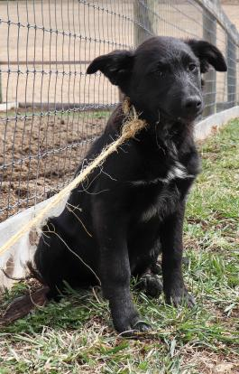 Rottweiler Puppies For Sale In Ohio Under 300 Dollars Best Photos