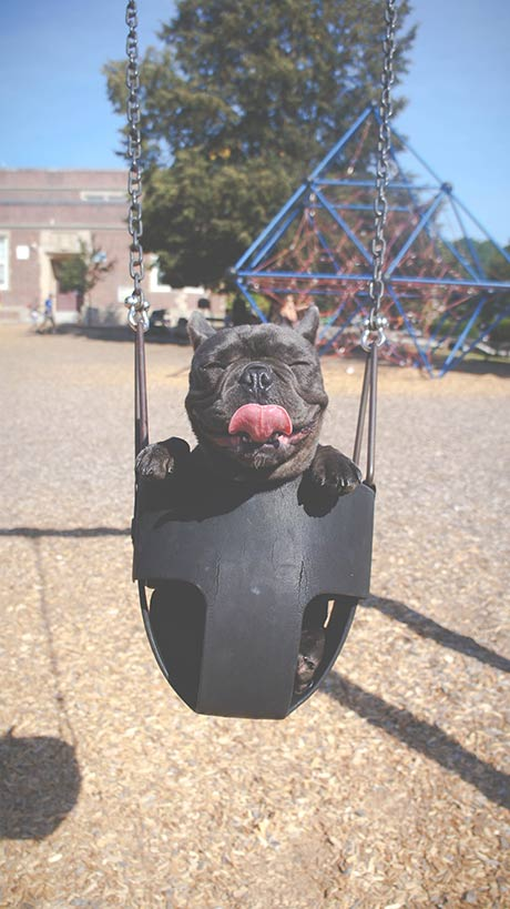 Happy Puppy From Reputable Breeder on Swingset